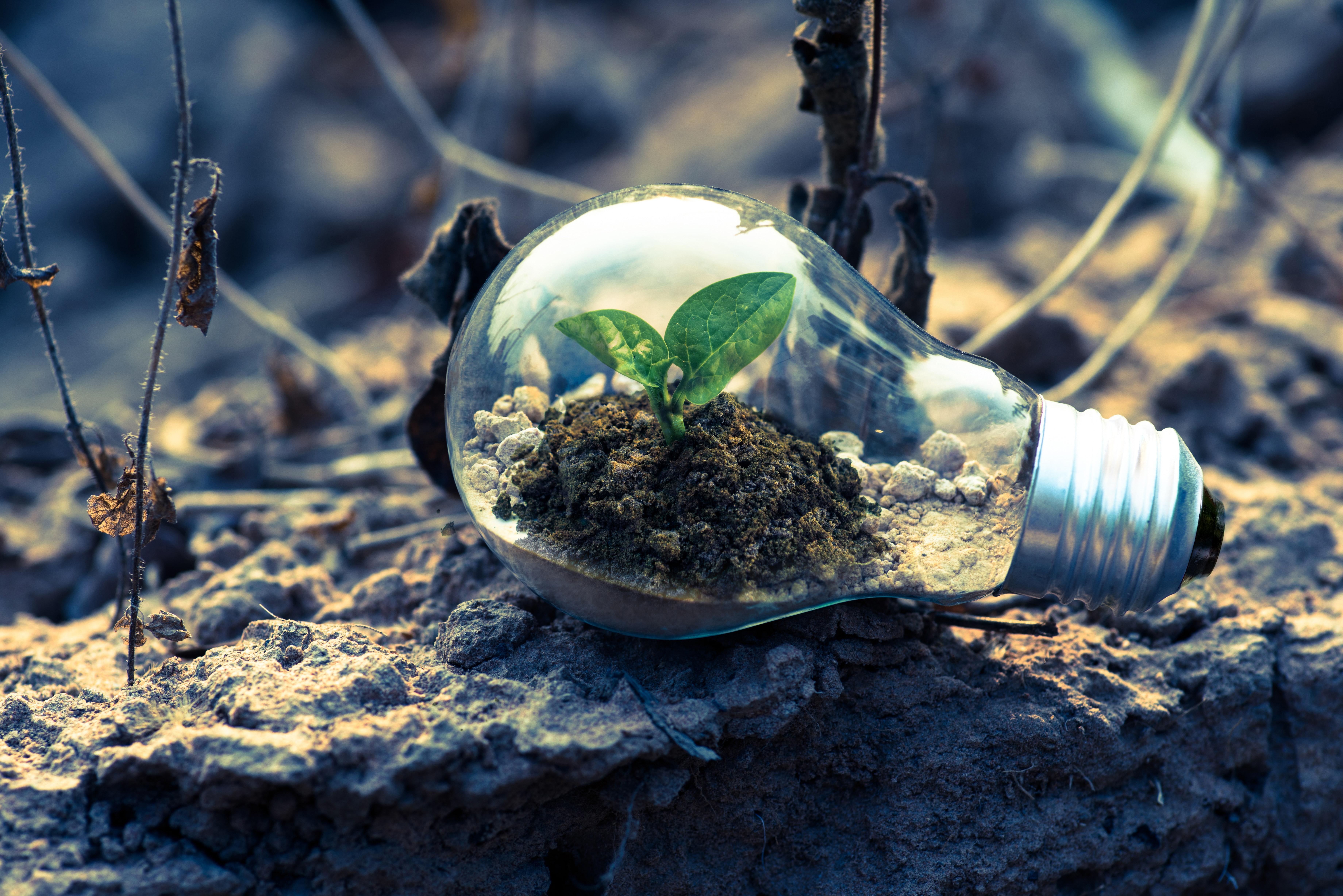 licht met zand en plantje in om kracht van kernkwadrant uit te beelden